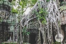 cambodia-2015-medres-14