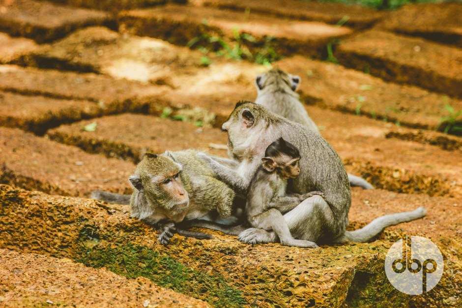 cambodia-2015-medres-41