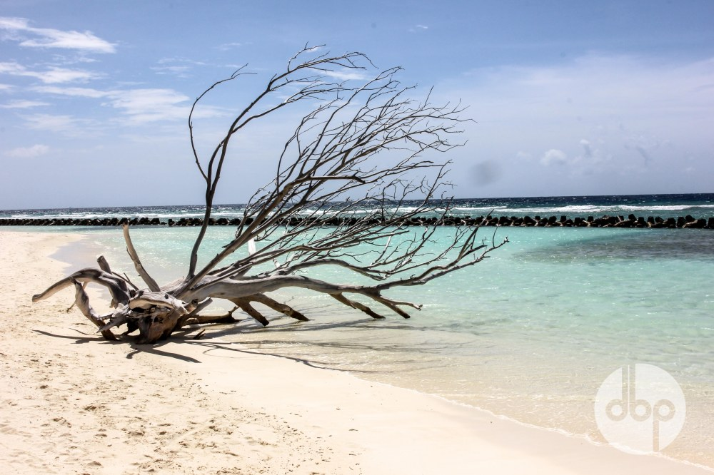 maldives-medres-logo-34