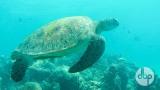 maldives-medres-logo-diving-5